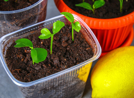 Grow a Garden From Fruit Seeds