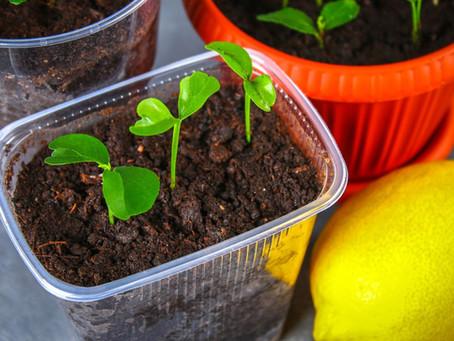 Grow a Garden From Fruit Seeds