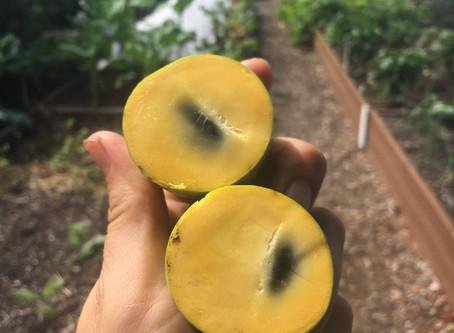 Teaching Garden Update 9/4