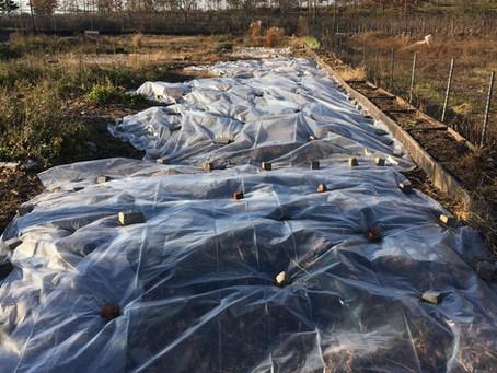 Teaching Garden Update 11/27