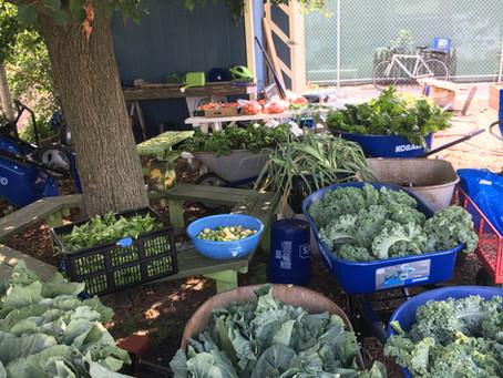 Increase Garden Production (Day 3 of Beginner Gardener Intensive 2021)