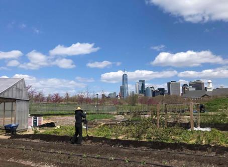 Teaching Garden Update 4/24