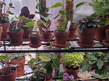 Indoor Gardening Genius (Day 4 of Beginner Gardener Intensive 2021)