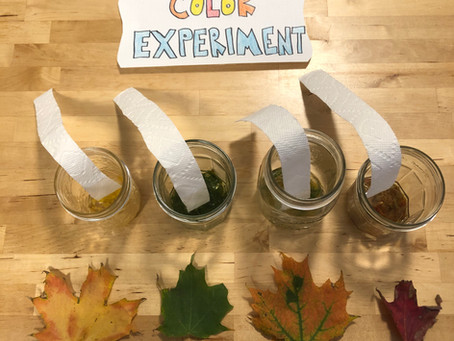 Farmer Scientist: Leaf Color Experiment