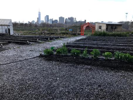 Teaching Garden Update 4/30/21