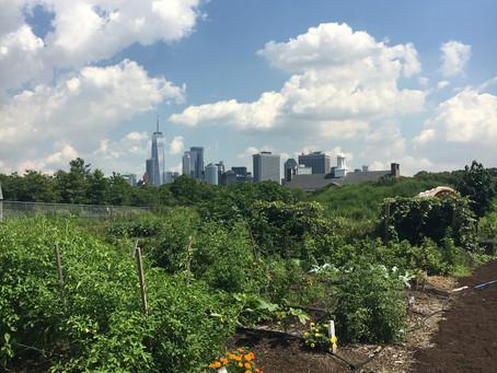 Teaching Garden Update 7/31