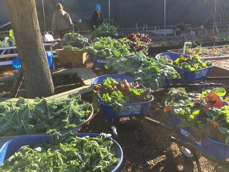 Teaching Garden Update 12/4