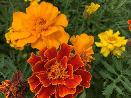 Teaching Garden Update 5/8