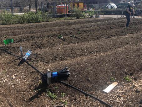 Teaching Garden Update 4/16/21