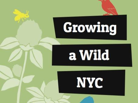 Growing a Wild NYC: Pollinators