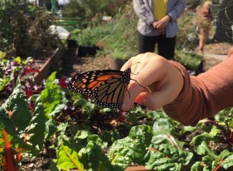 Teaching Garden Update 10/9