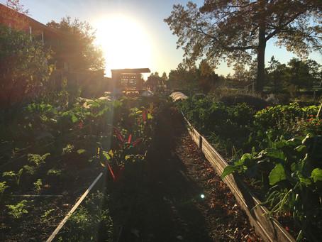 Teaching Garden Update 11/6