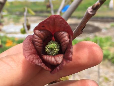 Teaching Garden Update 5/15