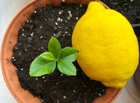 Summer Garden Series: Grow a Garden from Food Scraps