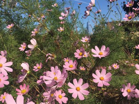 Teaching Garden Update 10/16