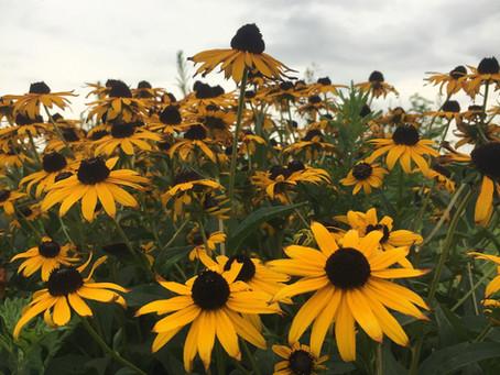 Teaching Garden Update 8/7