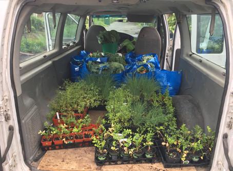 Teaching Garden Update 7/24