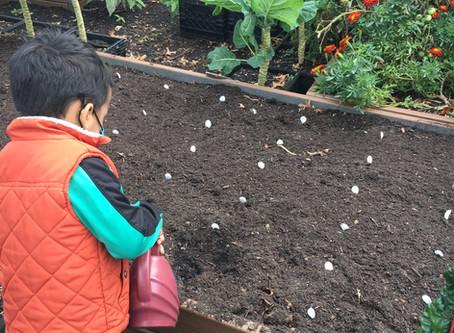 Teaching Garden Update 10/23