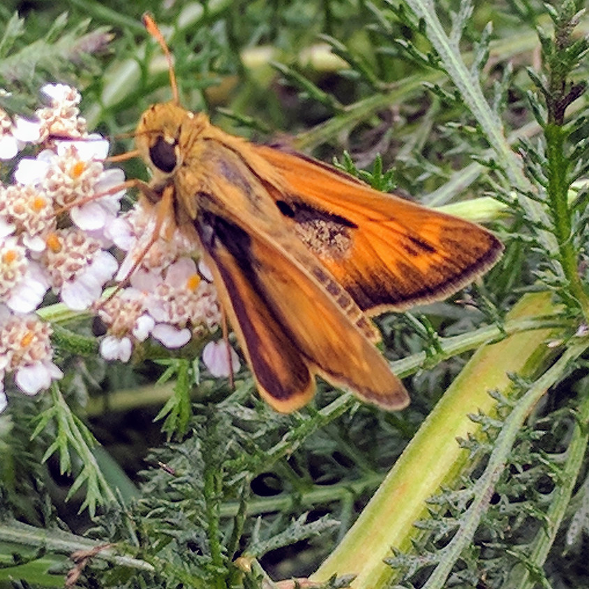 2019 Fall NABA Butterfly Count