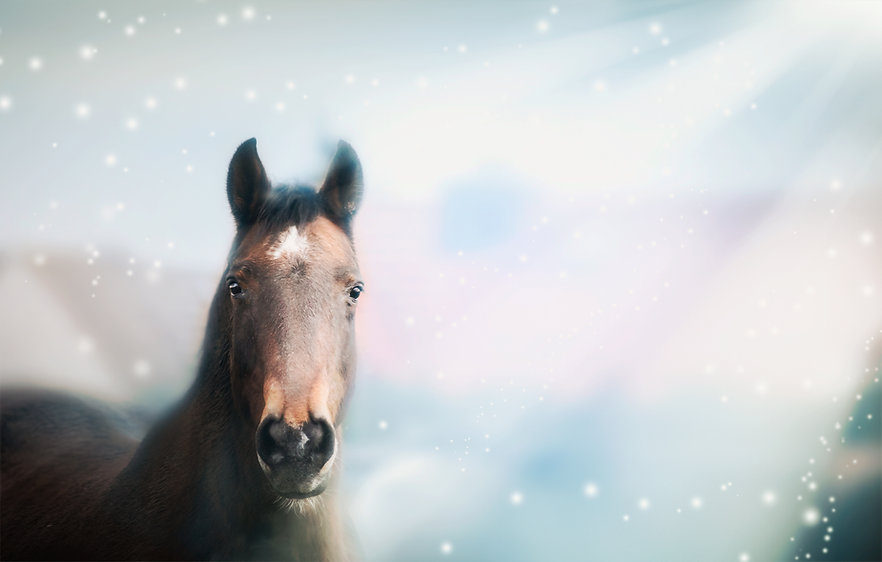 LIDIA- HORSE.jpg
