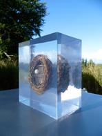Local Nest