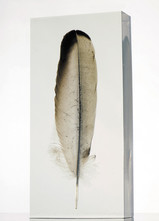 Vulture Feather