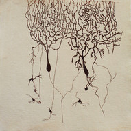 Axon, Soma, Dendrites