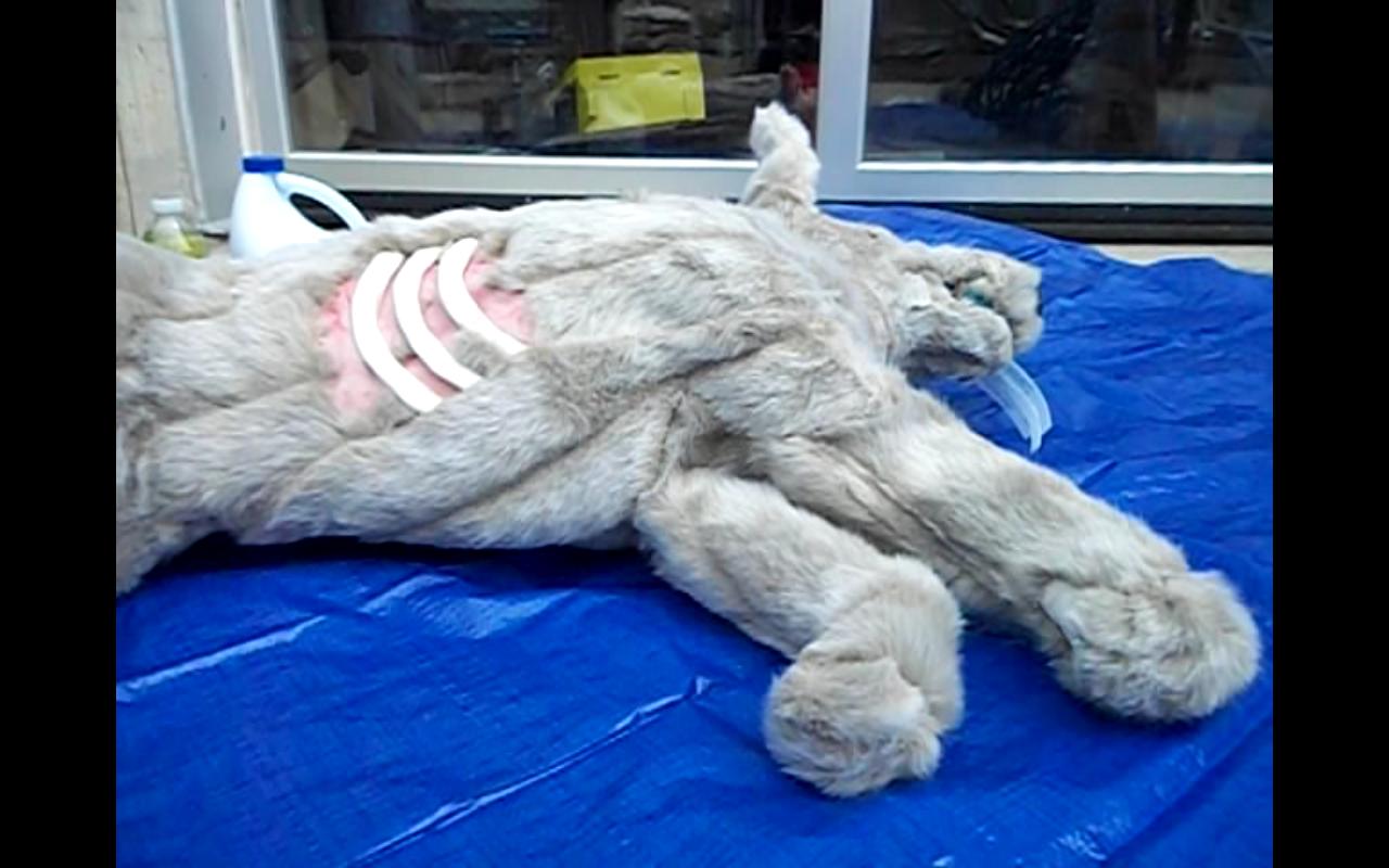 Industrial Dead Fox