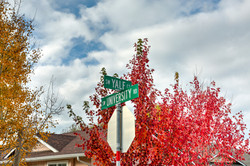 Fall Colors at the coner of Yale and