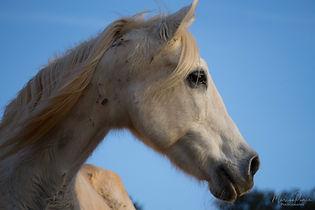 caballos al atardecer 2018-35.jpg