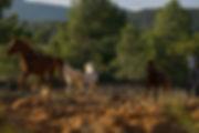 caballos al atardecer 2018-8.jpg