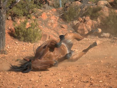 Tener un caballo ¡Informate antes de dar el paso!
