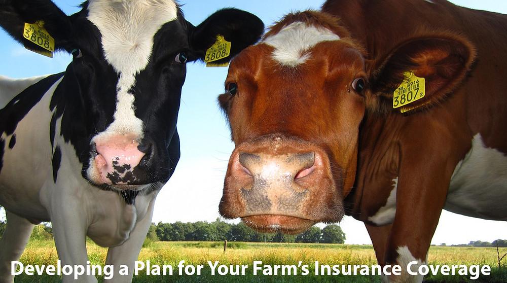 Grain elevator insurance, Feed Mill insurance, Crop Insurance, Seed Plants, Fertilizer Insurance, Petroleum & Ag Co-ops, Bulk retail petroleum, dairy & Creamery plants Insurance
