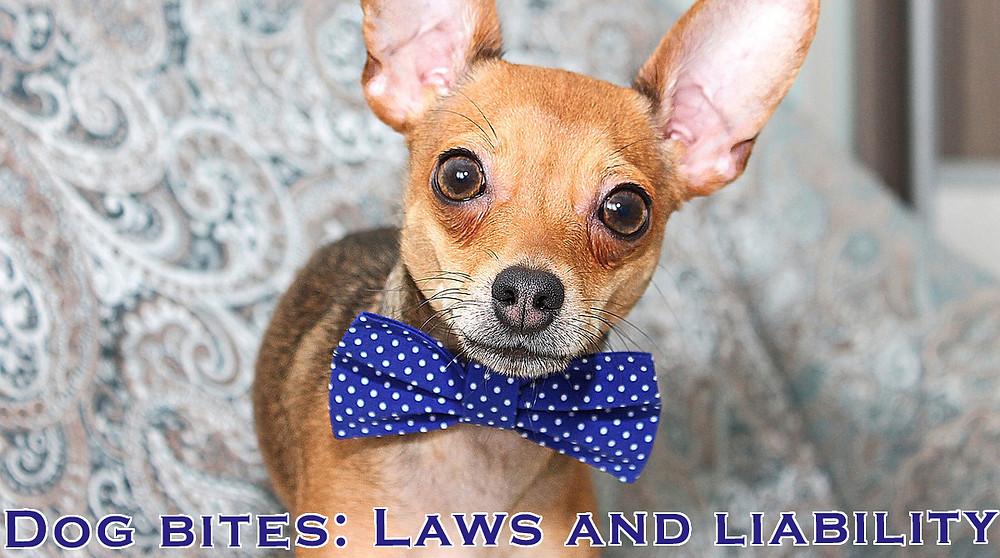 Michigan Insurance, Liability Insurance, Dog bite insurance