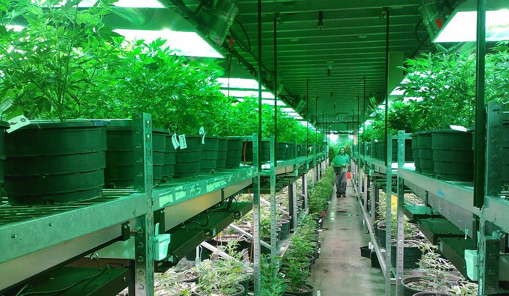 Michigan Marijuana Insurance, Michigan Cannabis Insurance, Michigan Dispensary insurance