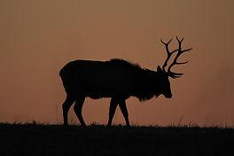 Sunrise Elk.JPG