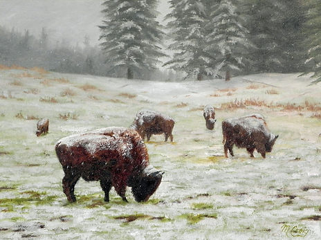 Five Frosted Bison s.jpg