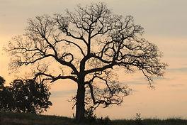 Tree of Life_2.JPG