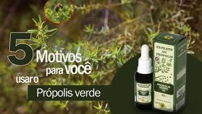 5 Motivos para você usar o Própolis verde!