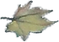 Yiwen leaf HiRes.png