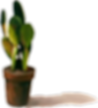 Sohyun plant.png