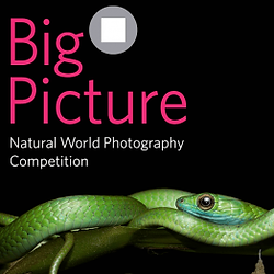 BigPicture-Natural-World Photography-Competition-2021