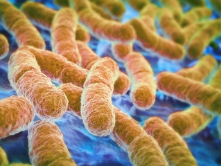 How gut bacteria communicate within our bodies, build special relationship