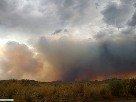 What is a Bushfire Planning Consultant?