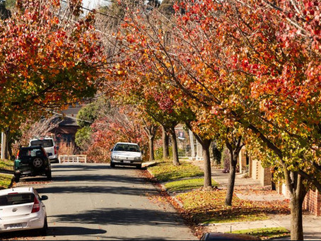 Trees are important for neighbourhood health