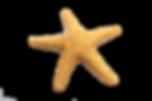 Estrela do Mar.png