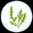 planted seaweed