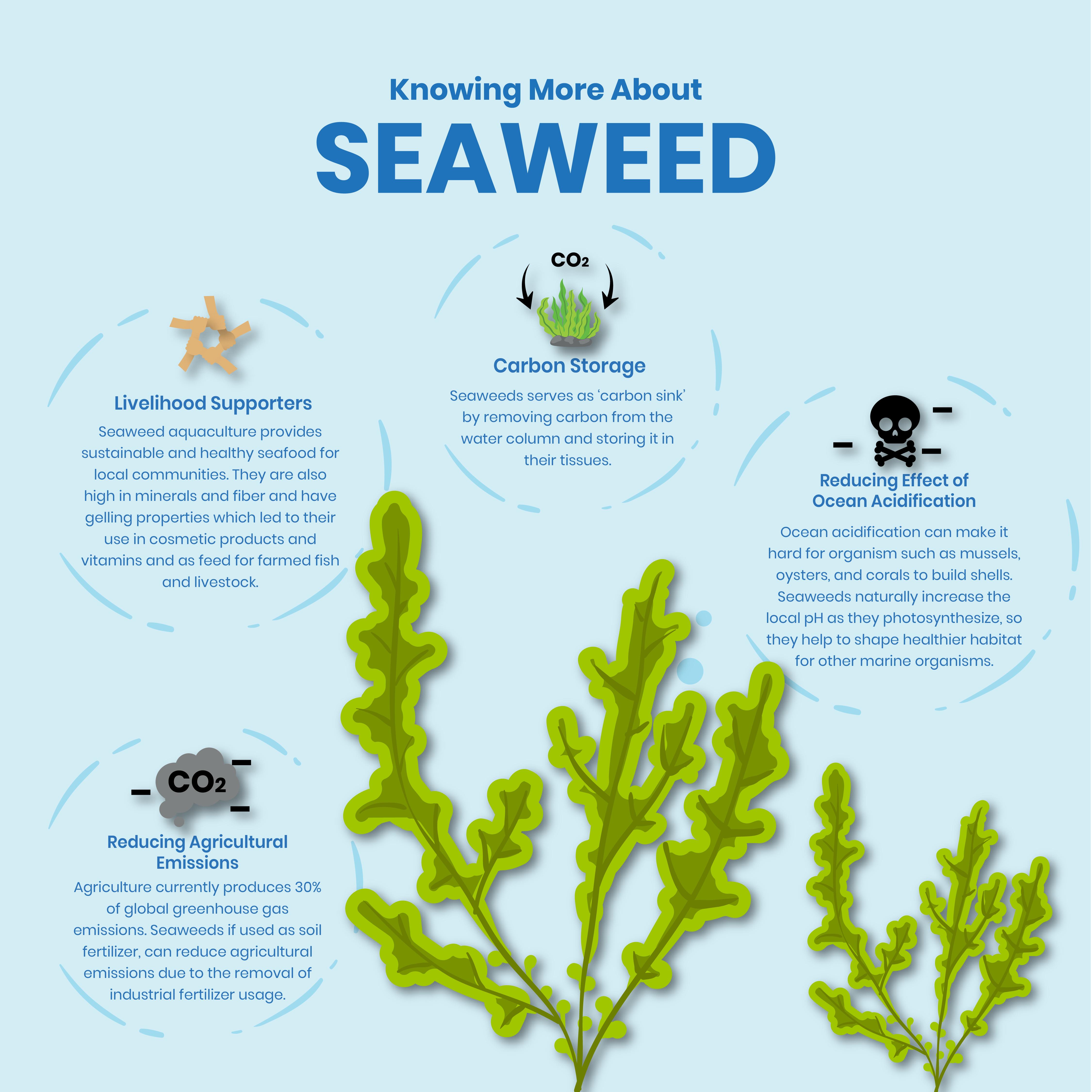Blue Carbon - Seaweed