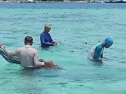 Seaweed training