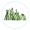 Seagrass-Circle-Icon